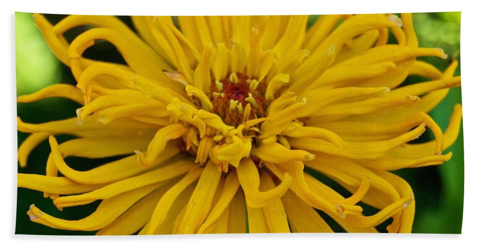 Annual Bath Sheet featuring the photograph Yellow Zinnia_9480_4272 by Michael Peychich