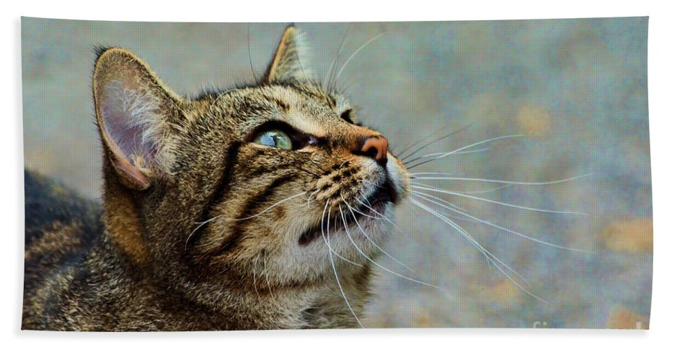 Nature Hand Towel featuring the photograph Yes I Am A Pretty Kitty by Debbie Portwood