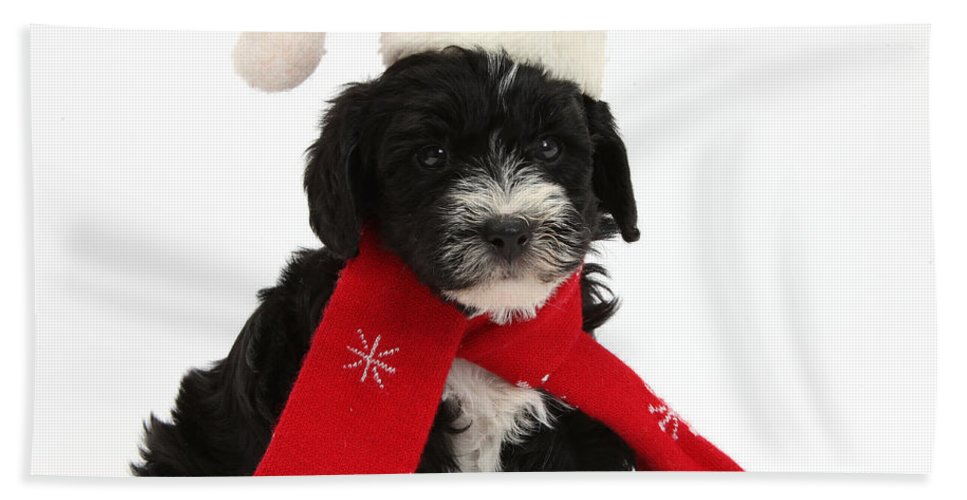 Nature Hand Towel featuring the photograph Yorkipoo Pup Wearing Christmas Hat by Mark Taylor