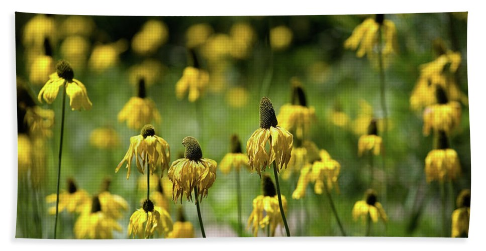 California Hand Towel featuring the photograph Yosemite Coneflowers by Peter Tellone