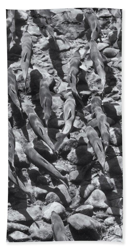 Kokanee Fish Hand Towel featuring the photograph You Can Run.... by Linda Dunn