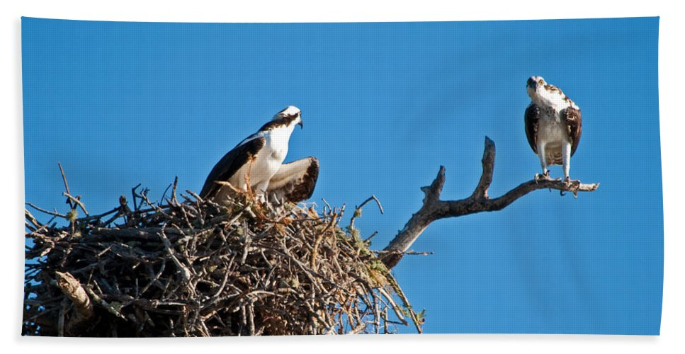 Osprey Bath Towel featuring the photograph You Lookin At Me by Christine Stonebridge
