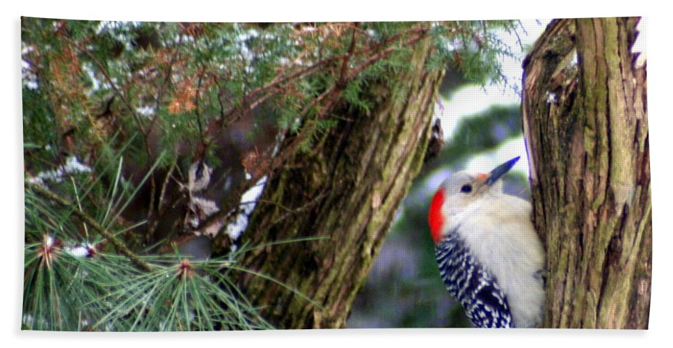Red-bellied Woodpecker Bath Sheet featuring the photograph Young Red-bellied Woodpecker by Laurel Talabere