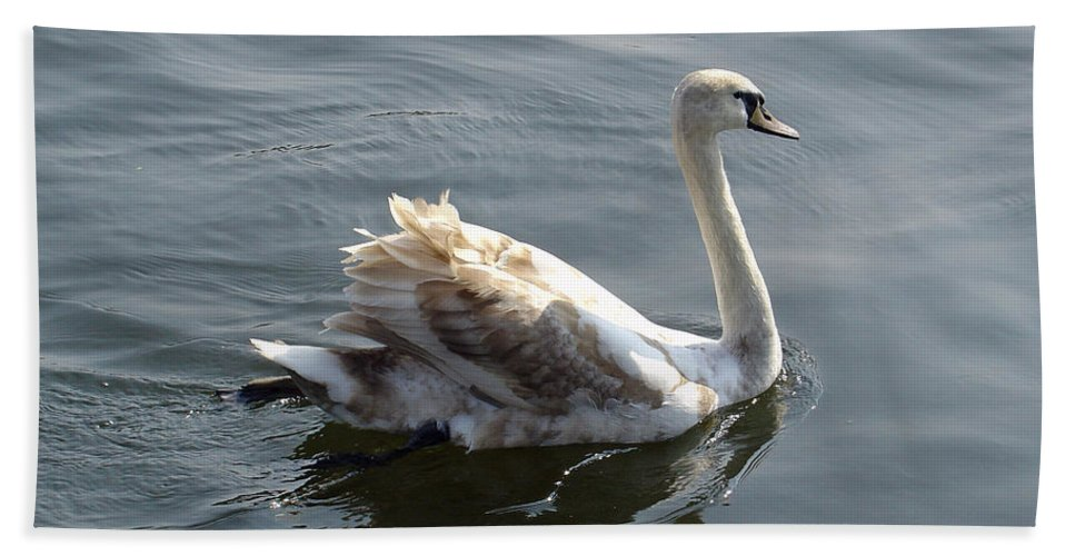 Europe Bath Sheet featuring the photograph Young Swan by Rod Johnson