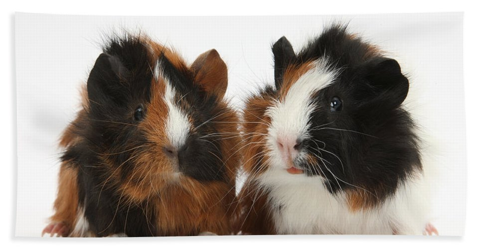 Nature Hand Towel featuring the Young Tricolour Guinea Pigs by Mark Taylor