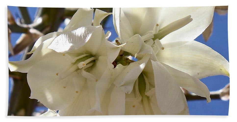 Yucca Hand Towel featuring the photograph Yucca Flowers by Kume Bryant