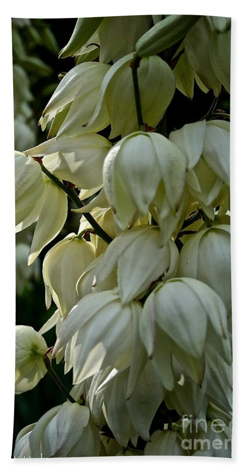 Floral Bath Sheet featuring the photograph Yucca by Susan Herber