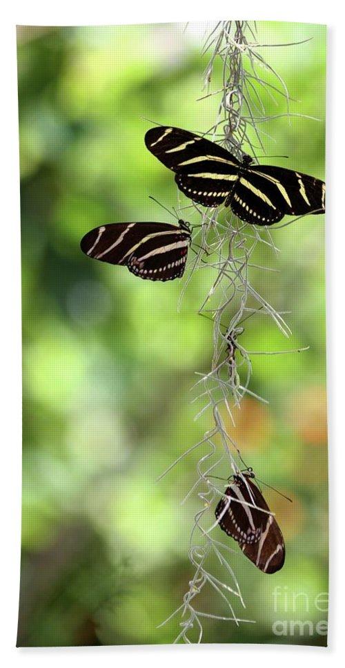 Zebra Bath Sheet featuring the photograph Zebra Butterflies Hanging Out by Sabrina L Ryan
