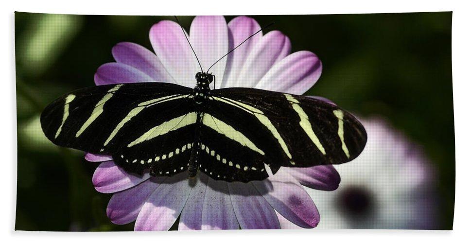 Zebra Longwings Butterfly Bath Sheet featuring the photograph Zebra Longwings by Saija Lehtonen