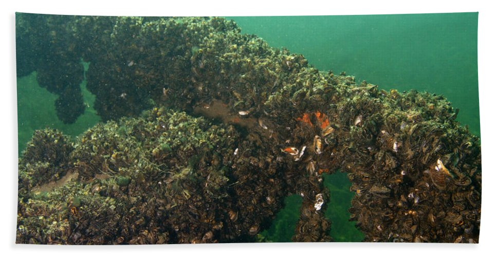 Animal Hand Towel featuring the photograph Zebra Mussels by Ted Kinsman