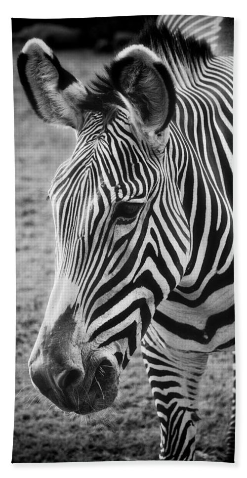Zebra Bath Sheet featuring the photograph Zebra by Saija Lehtonen