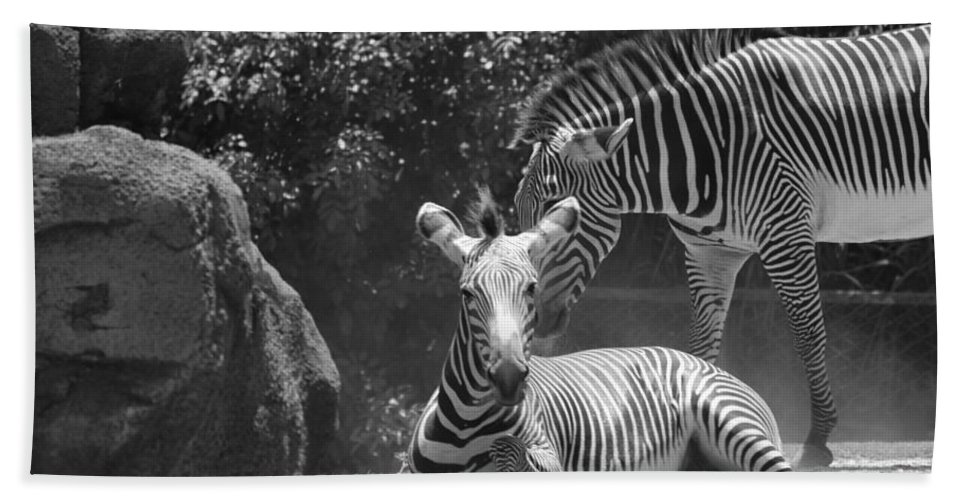 Animal Hand Towel featuring the photograph Zebras In Black And White by Rob Hans