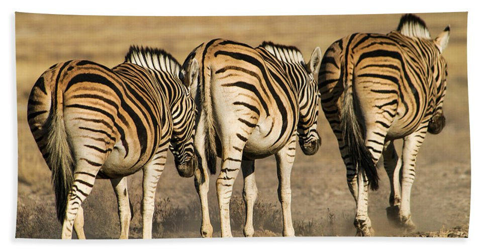 Action Hand Towel featuring the photograph Zebras Three by Alistair Lyne