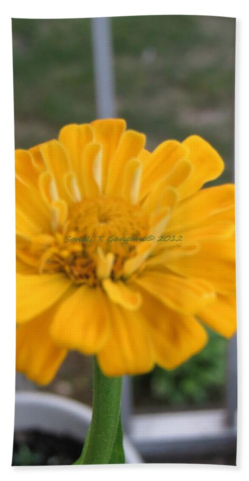 Amarillo Flower Bath Sheet featuring the photograph Zinnia Named After Zinn by Sonali Gangane