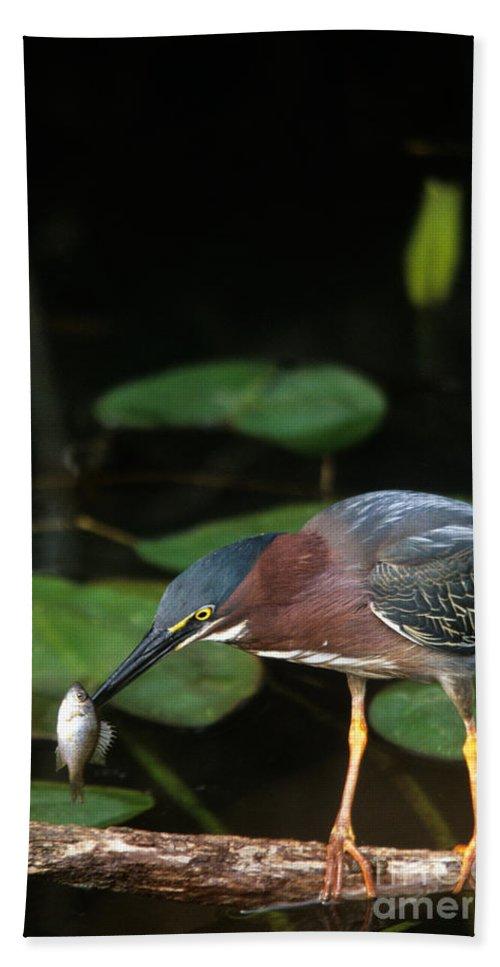 Heron Bath Sheet featuring the photograph A Green Heron With Fish by John Harmon