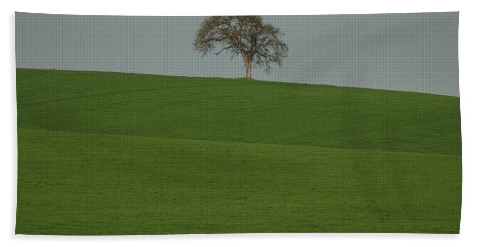 Tree Field Bath Sheet featuring the photograph A Lone by Sara Stevenson