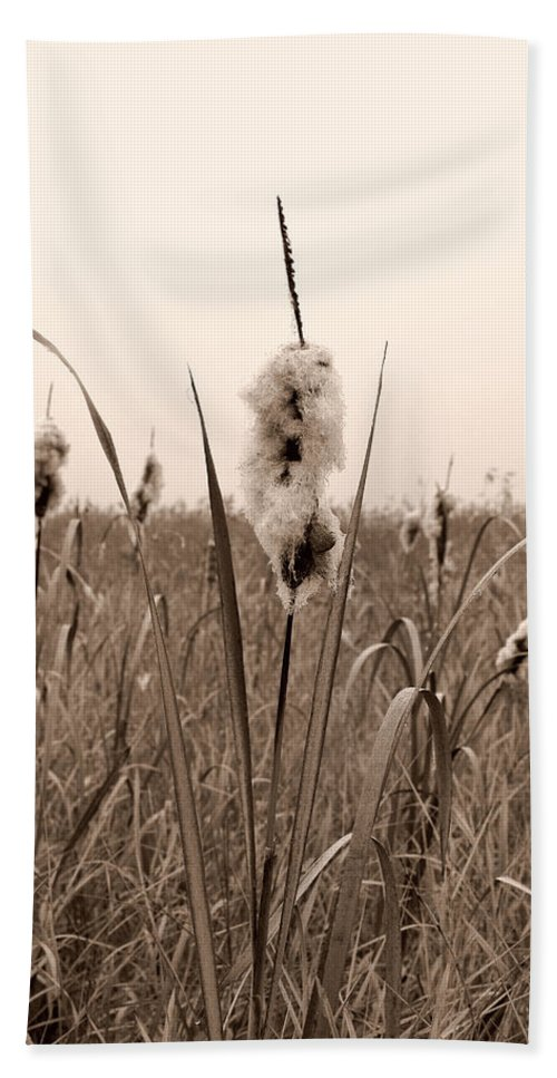 Lehtokukka Bath Sheet featuring the photograph Broadleaf Cattail 1 by Jouko Lehto