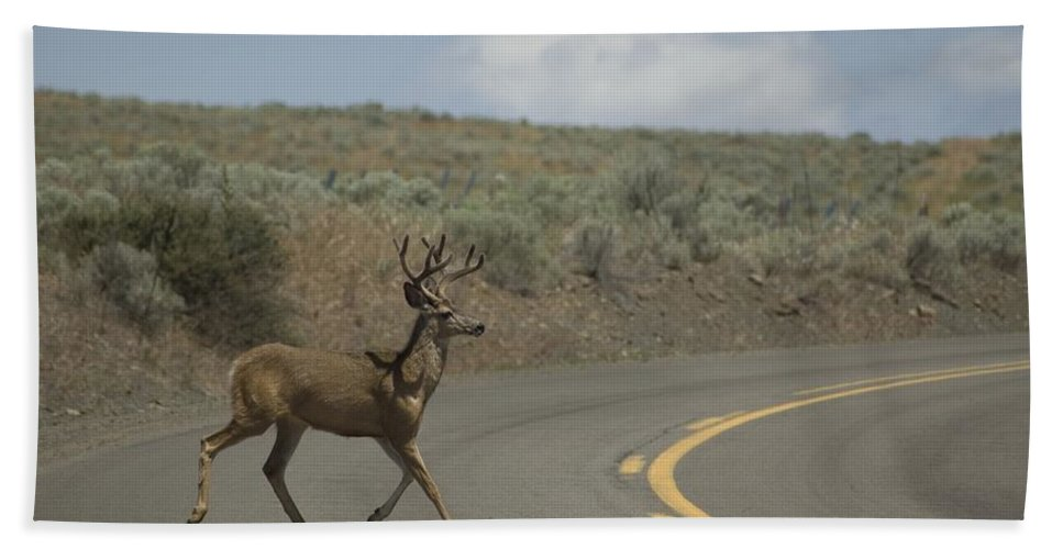 Buck Bath Sheet featuring the photograph Deer 1 by Sara Stevenson