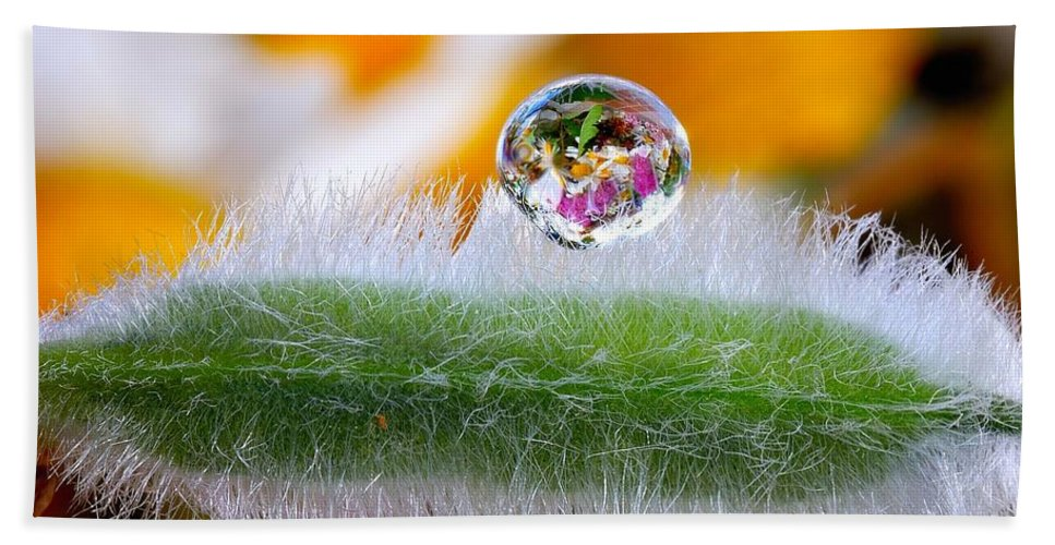 Drop Of Rain Hand Towel featuring the photograph  Drop Of Rain On The Pod Lupine by Yuri Hope