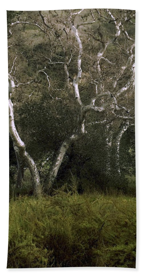 Tree Bath Towel featuring the photograph Dv Creek Trees by Karen W Meyer