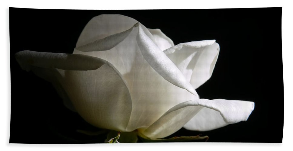 Rose Hand Towel featuring the photograph Evening Light White Rose Flower by Jennie Marie Schell