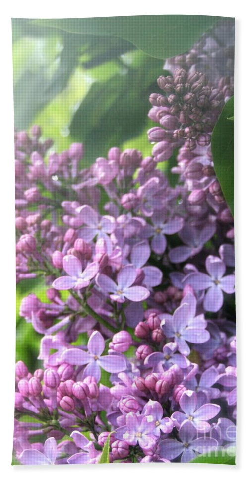 Lilac Hand Towel featuring the photograph Lilacs On A Misty Morning by Amy Sorvillo