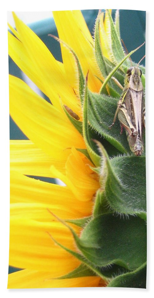 Sunflower Bath Towel featuring the photograph ... Small Break by Line Gagne