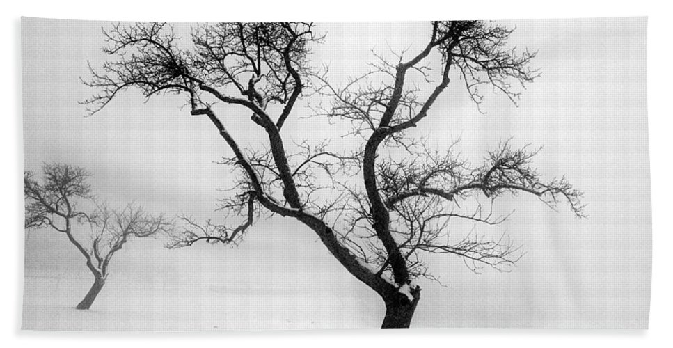 Empty Hand Towel featuring the photograph Tree In The Snow by Ilan Amihai