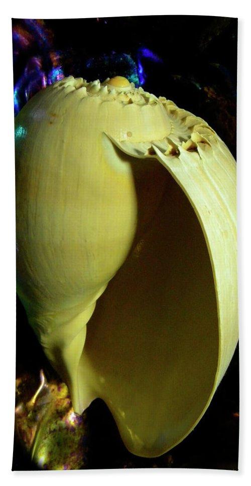 Frank Wilson Bath Sheet featuring the photograph  Voluta Amphora Seashell by Frank Wilson