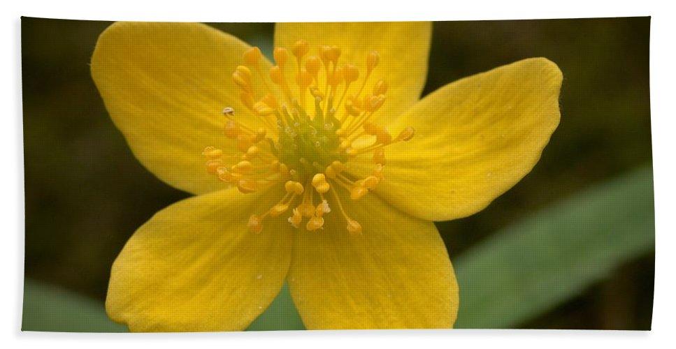Lehtokukka Hand Towel featuring the photograph Yellow Wood Anemone by Jouko Lehto