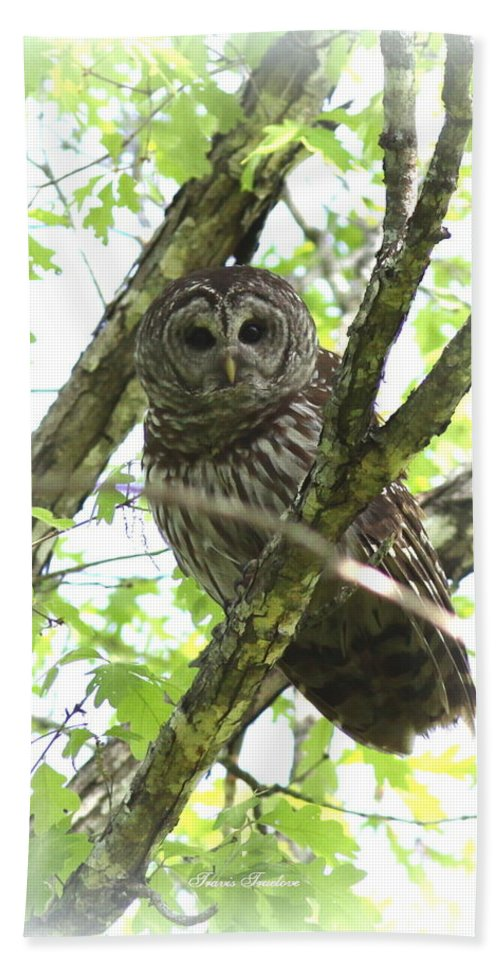 Barred Owl Hand Towel featuring the photograph 0304-002 - Barred Owl by Travis Truelove