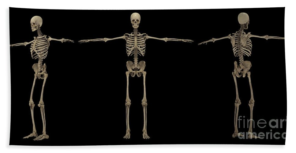 Biomedical Illustrations Bath Sheet featuring the digital art 3d Rendering Of Human Skeletal System by Stocktrek Images