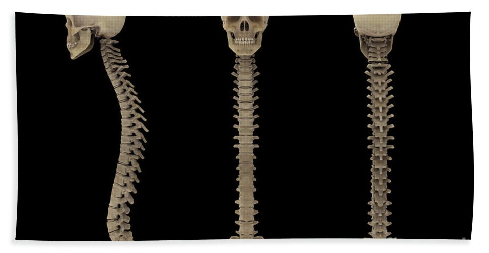 Biomedical Illustrations Bath Sheet featuring the digital art 3d Rendering Of Human Vertebral Column by Stocktrek Images
