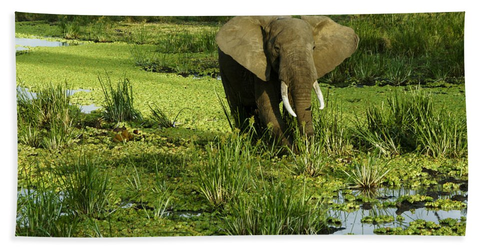 Africa Hand Towel featuring the photograph African Elephant In Swamp by Michele Burgess