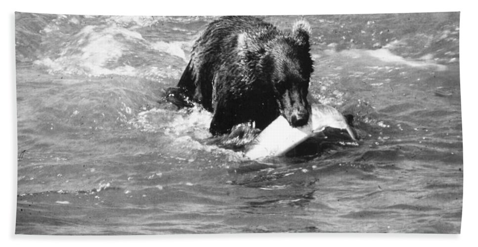20th Century Bath Sheet featuring the photograph Alaska: Brown Bear by Granger