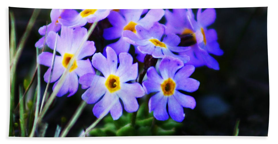 Flowers Hand Towel featuring the photograph Alaskan Wild Flowers by Anthony Jones