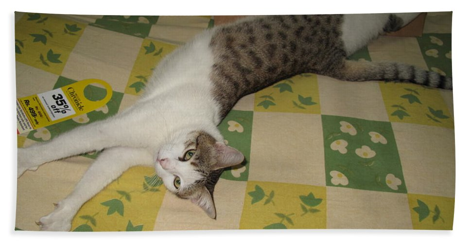 Relaxed Cat Bath Sheet featuring the photograph Ammani The Cat by Asha Sudhaker Shenoy