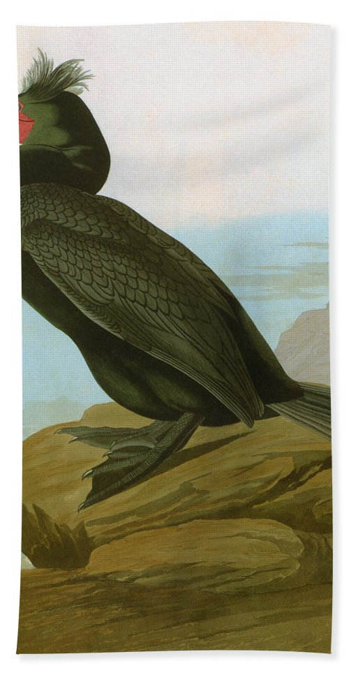 1838 Hand Towel featuring the photograph Audubon: Cormorant by Granger