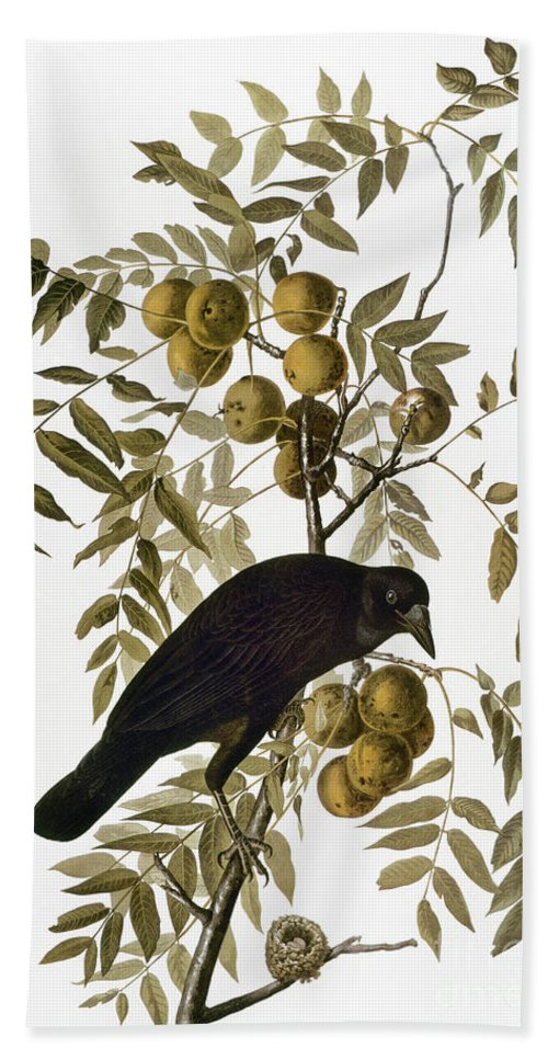 1838 Hand Towel featuring the photograph Audubon: Crow by Granger