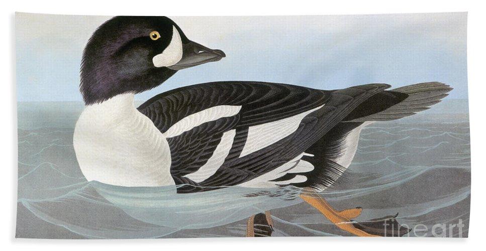 America Hand Towel featuring the photograph Audubon Duck by John James Audubon