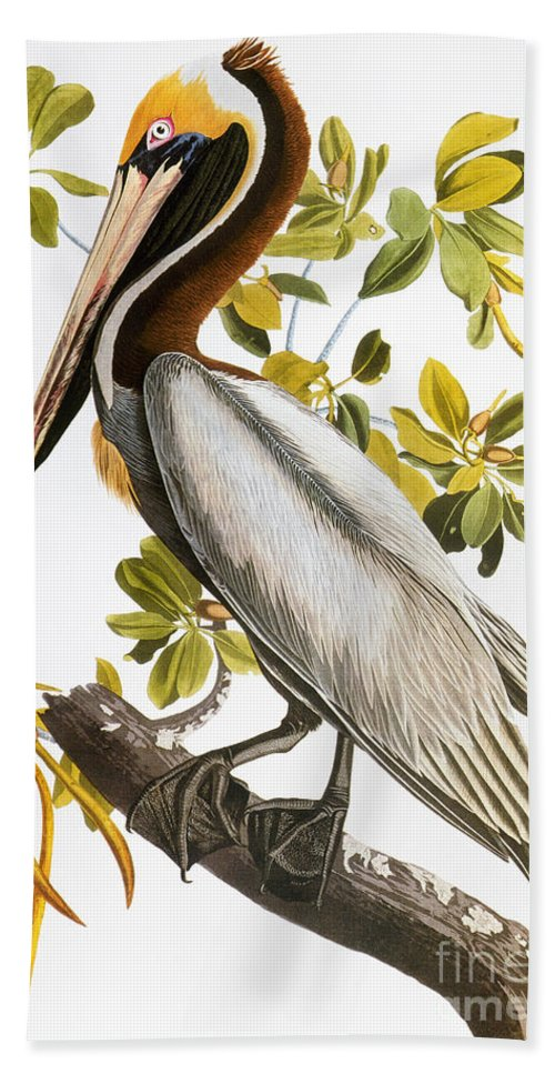 1838 Hand Towel featuring the photograph Audubon: Pelican by Granger