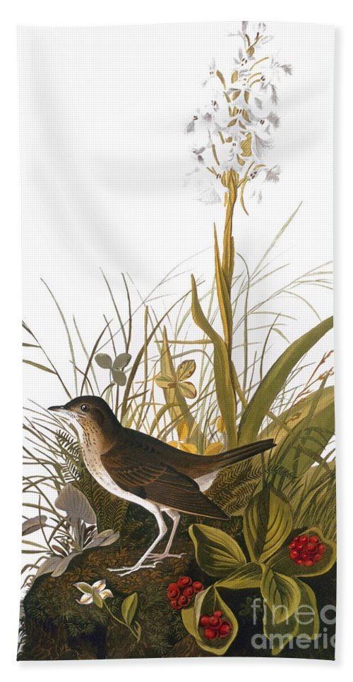 1838 Hand Towel featuring the photograph Audubon: Thrush by Granger