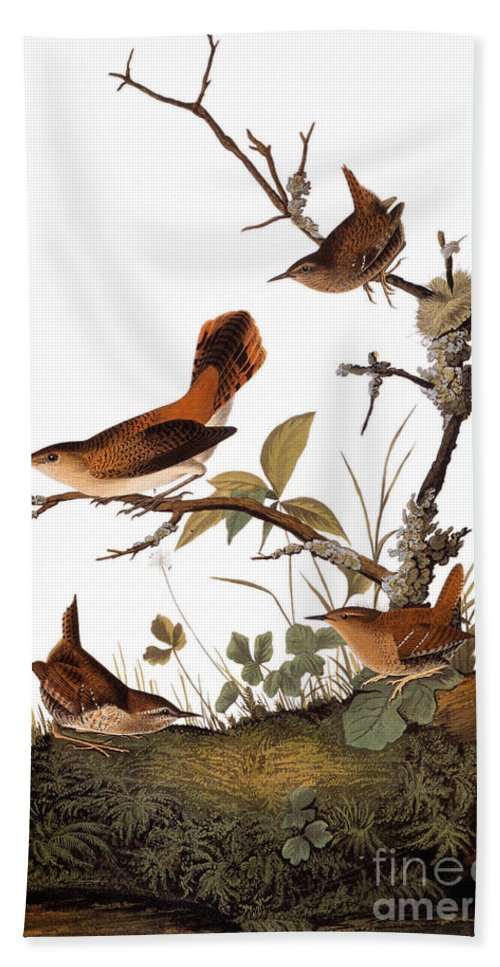 1838 Hand Towel featuring the photograph Audubon: Wren by Granger