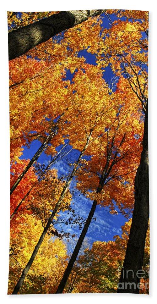 Autumn Bath Sheet featuring the photograph Autumn Forest by Elena Elisseeva
