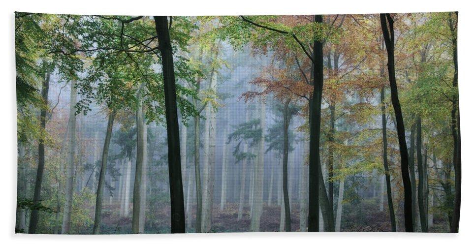 Autumn Bath Sheet featuring the photograph Autumn Frame by Ceri Jones