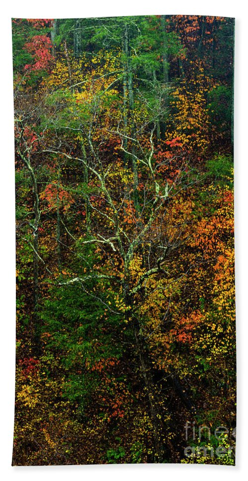 Autumn Bath Sheet featuring the photograph Autumn Hillside Blue Ridge Parkway by Thomas R Fletcher