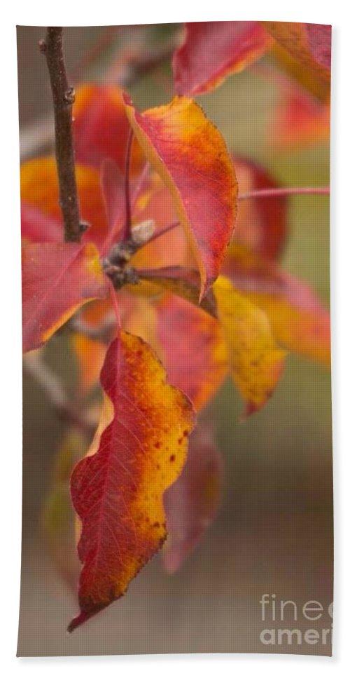 Autumn Hand Towel featuring the photograph Autumn Leaves by Marta Robin Gaughen