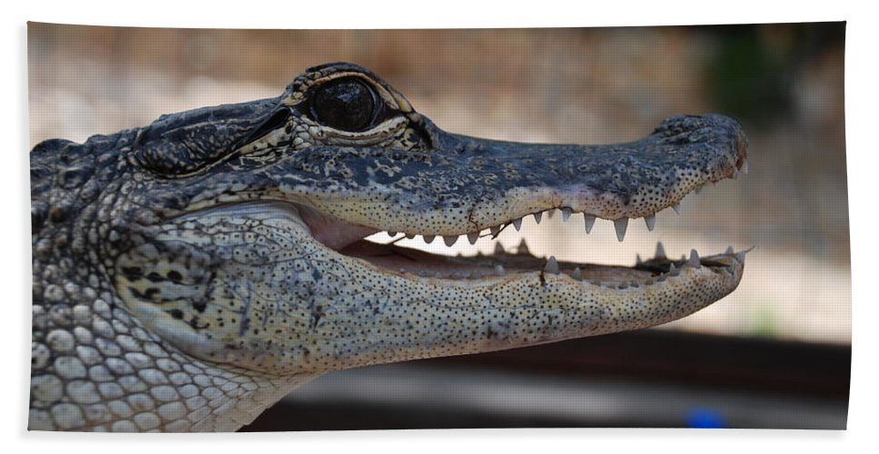 Macro Bath Towel featuring the photograph Baby Gator by Rob Hans