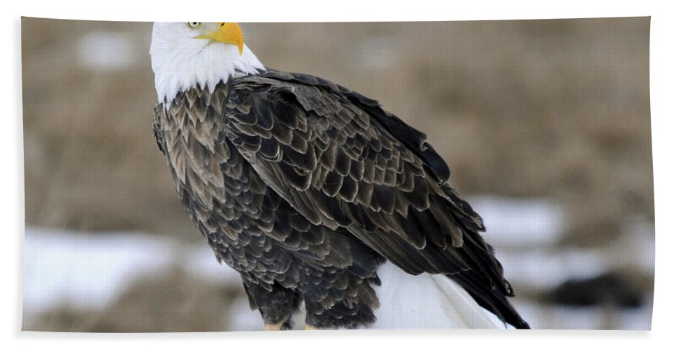Bald Eagle Hand Towel featuring the photograph Bald Eagle by Gary Beeler