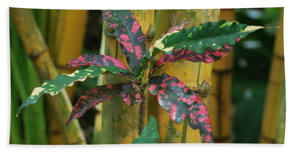 Macro Bath Towel featuring the photograph Bamboo Flower by Rob Hans